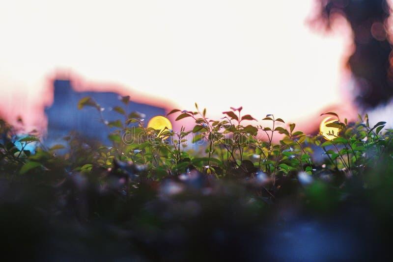 Vegetation in der Stadt lizenzfreies stockfoto