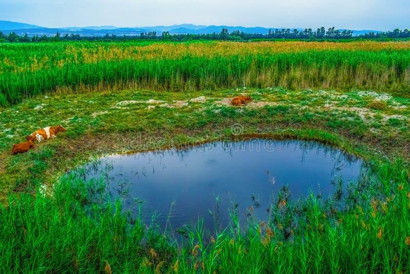 Vegetation, Ecosystem, Grassland, Nature Reserve Free Public Domain Cc0 Image