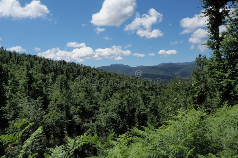 Vegetation, Ecosystem, Spruce Fir Forest, Tropical And Subtropical Coniferous Forests stock image