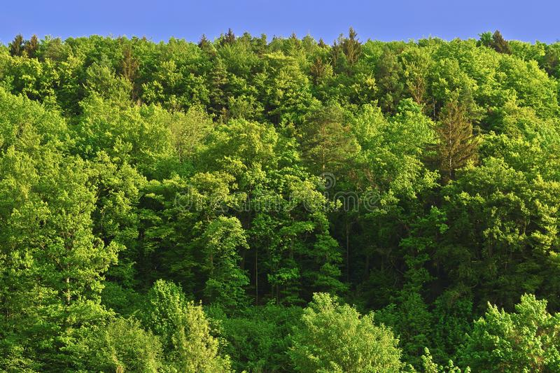 Vegetation, Ecosystem, Temperate Broadleaf And Mixed Forest, Tropical And Subtropical Coniferous Forests stock photos