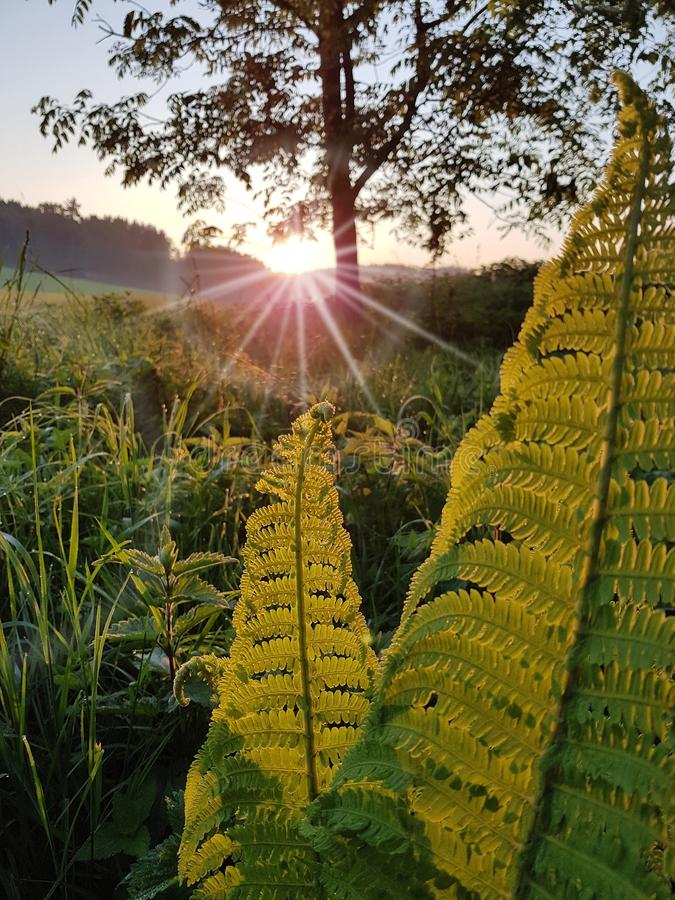 Vegetation, Field, Leaf, Morning royalty free stock photo