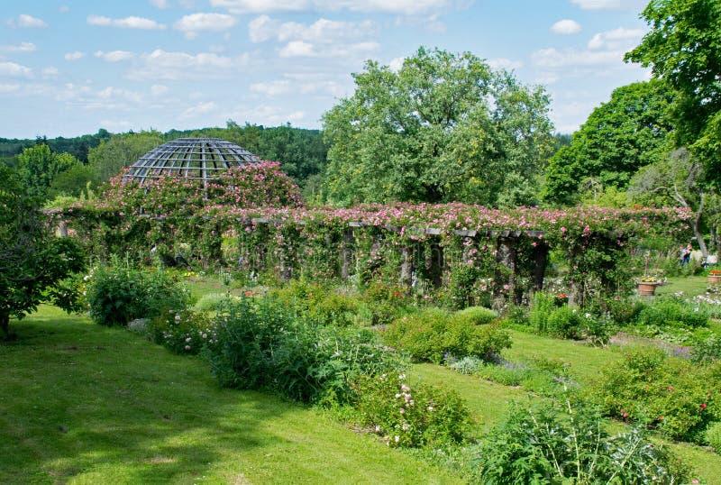 Vegetation, Garden, Botanical Garden, Plant royalty free stock image