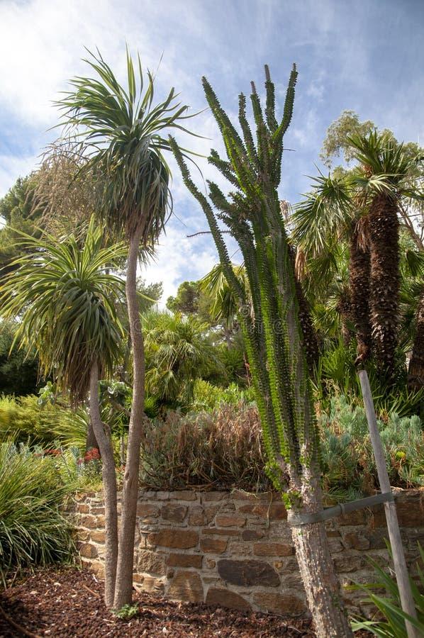 Download Vegetation On Gardens At Bormes Les Mimosa Stock Photo - Image: 34478966