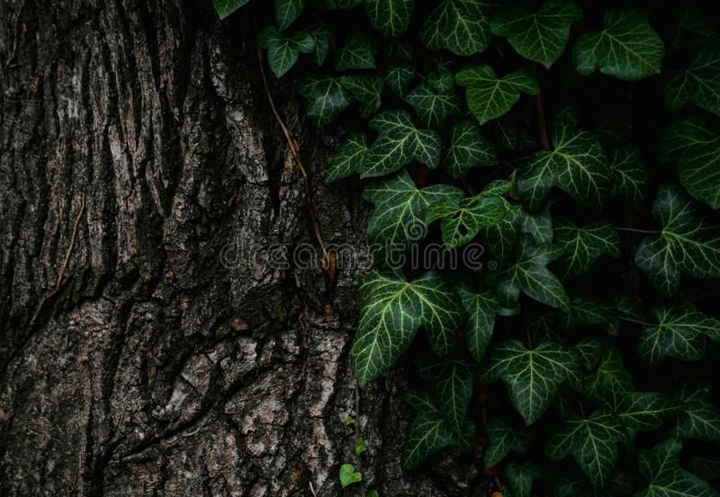 Vegetation, Green, Leaf, Tree stock images