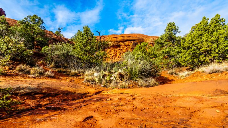 Vegetation growing on the Red Rocks and Red Soil in Coconino National Forest near Sedona stock image