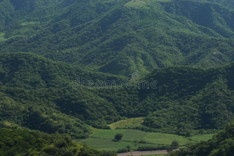 Vegetation, Highland, Hill Station, Nature Reserve royalty free stock images