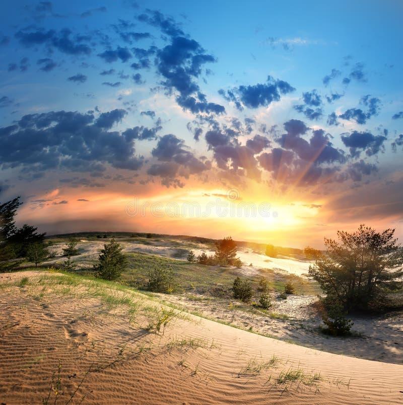 Vegetation i öknen fotografering för bildbyråer