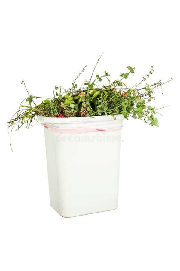 Vegetation i avfallcan arkivbild