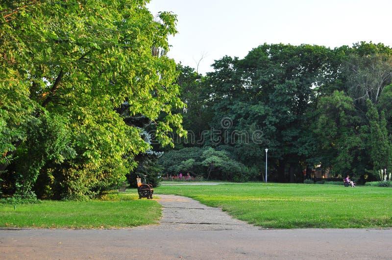 Vegetation im Park stockbild
