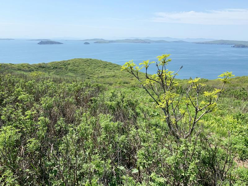 Vegetation on the island of Shkot in spring. Russia, Vladivostok.  royalty free stock photos