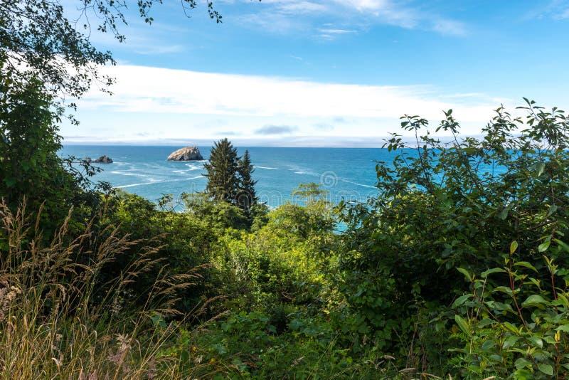 Vegetation längs den Kalifornien kustlinjen nära Crescent City California royaltyfri bild