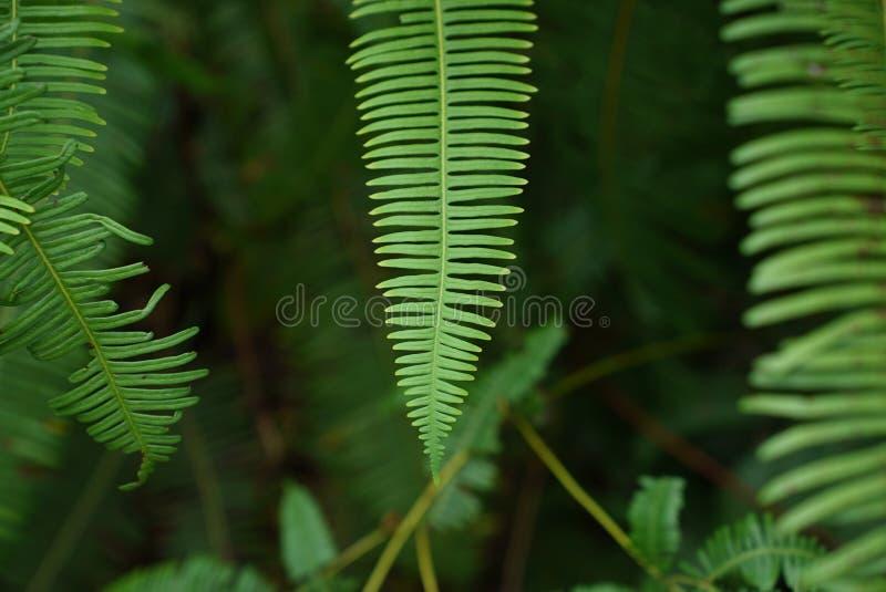 Vegetation, Leaf, Plant, Fern royalty free stock photo