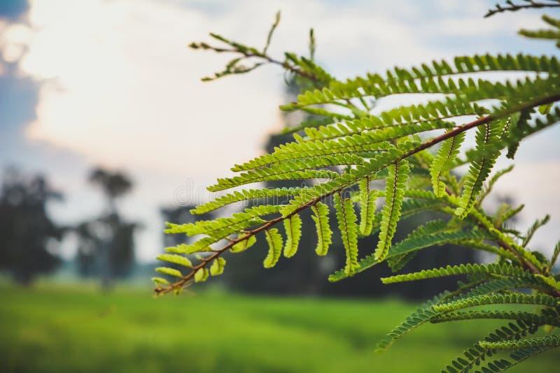 Vegetation, Leaf, Tree, Close Up stock photography