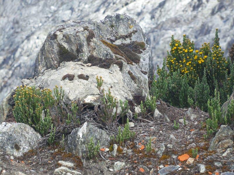 Vegetation an mehr als 4000 Metern lizenzfreie stockfotos