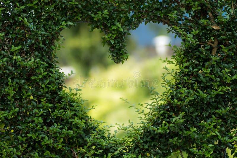 Vegetation, Nature, Green, Ecosystem stock photography