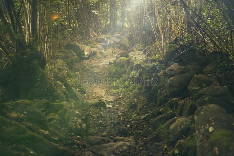 Vegetation, Nature, Nature Reserve, Water royalty free stock images