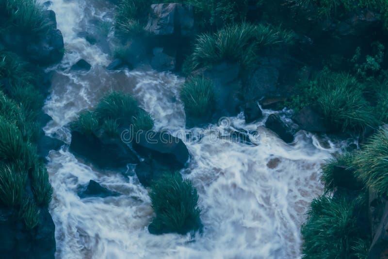 Vegetation p? Iguazuet Falls i Argentina royaltyfri fotografi