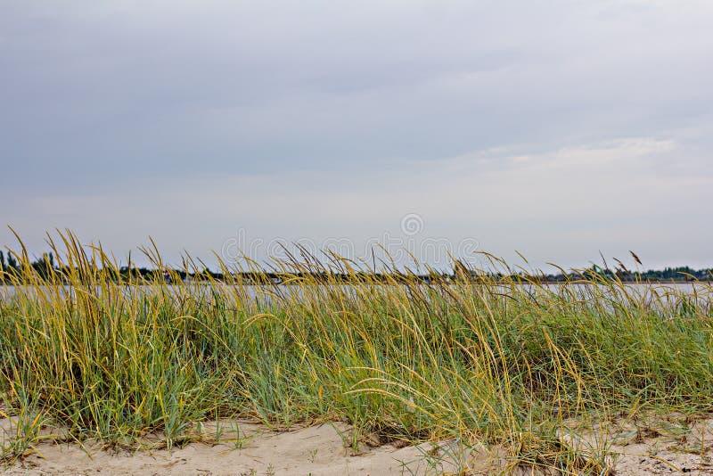 Vegetation på stranden och en härlig molnig himmel royaltyfri bild