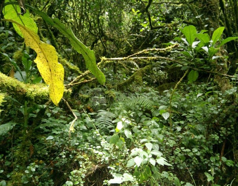 Vegetation royalty free stock photo
