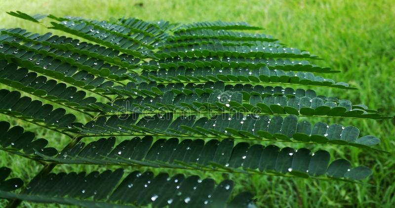 Vegetation, Plant, Leaf, Fern stock photo