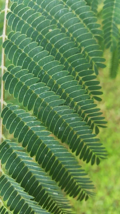 Vegetation, Plant, Leaf, Ostrich Fern royalty free stock images