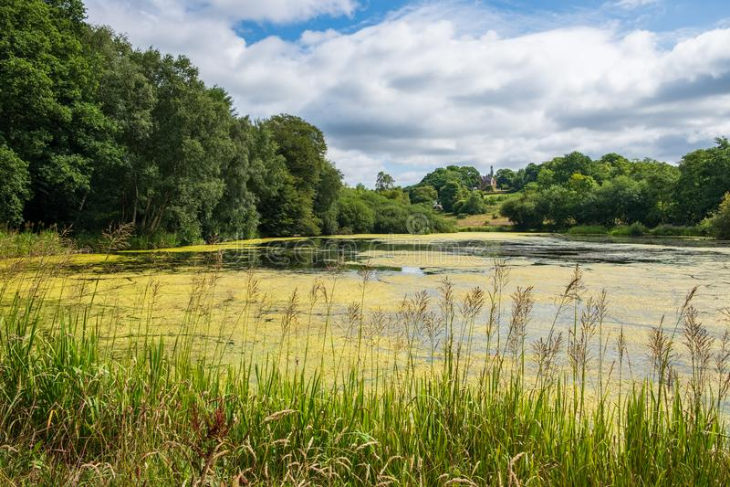 Vegetation and Pond near the Admissions Hut into Lyme Park, Dis. Ley in Chesire, United Kingdom stock images