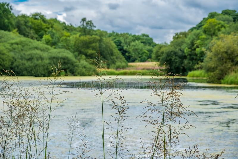 Vegetation and Pond near the Admissions Hut into Lyme Park, Dis. Ley in Chesire, United Kingdom stock photos