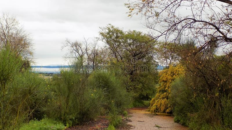 Vegetation in Retamar 2-ALHAURIN De-LA TORRE-Andalusien-Spanien-Europa lizenzfreie stockfotos