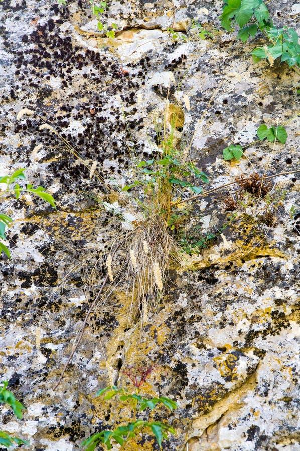 Vegetation on the rocks Devetakskoy caves, Bulgaria royalty free stock photography
