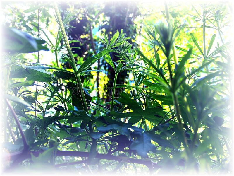 Vegetation in summer. Close-up on green plants royalty free stock photography
