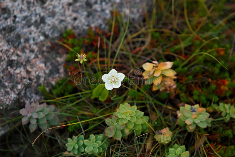 The vegetation of the tundra. The vegetation of the tundra stock image