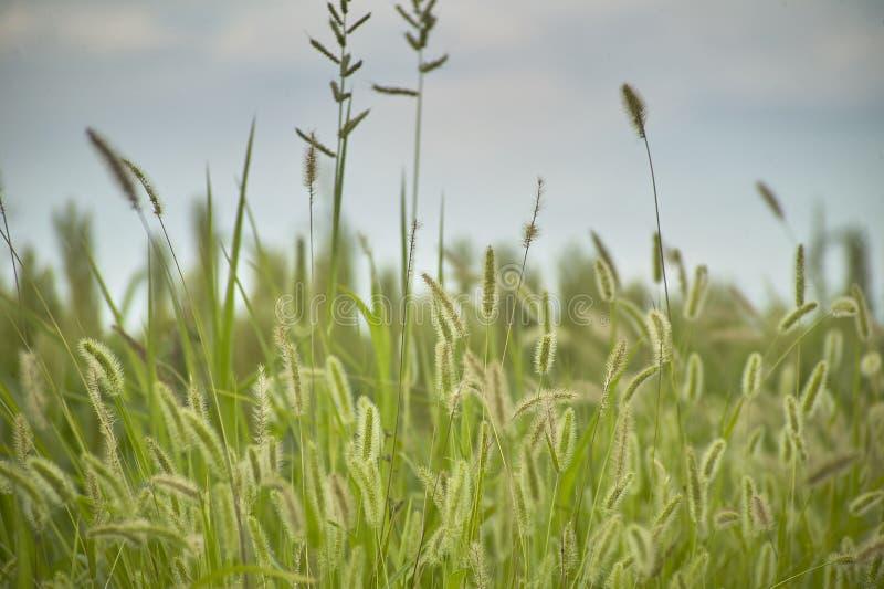 Download Vegetation und Gewitter stockbild. Bild von vegetation - 96930155