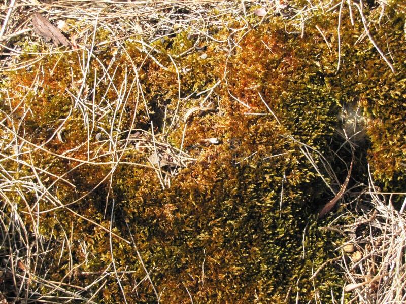 Vegetationtextur royaltyfria foton