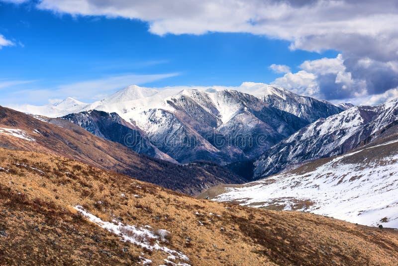 Vegetazione asciutta della tundra della montagna in molla in anticipo fotografia stock