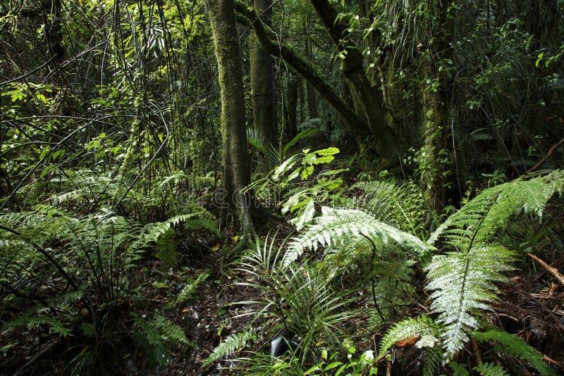 Vegetazione boschiva tropicale fotografia stock