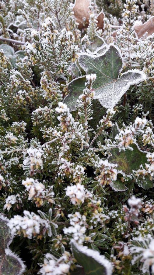 Vegetazione congelata fotografia stock libera da diritti