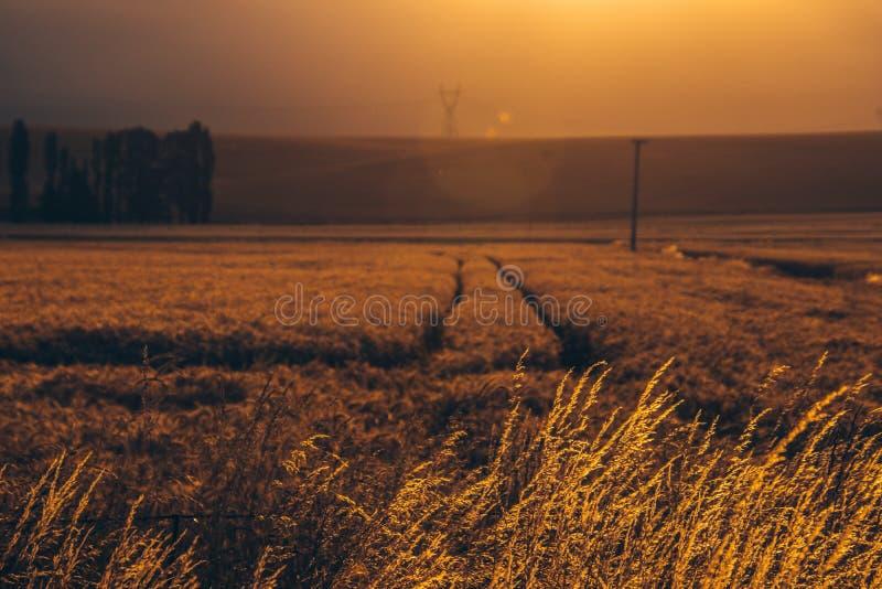 Vegetazione dorata del campo rurale al sole immagini stock