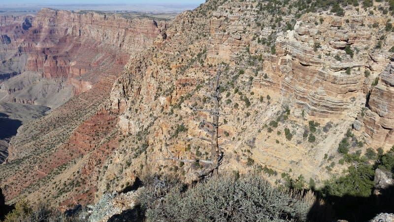 Vegetazione e durata minerale del canyon immagine stock