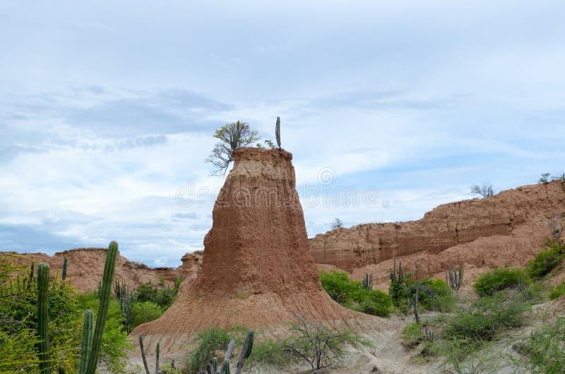 Vegetazione e forme di canyon in un deserto fotografia stock libera da diritti