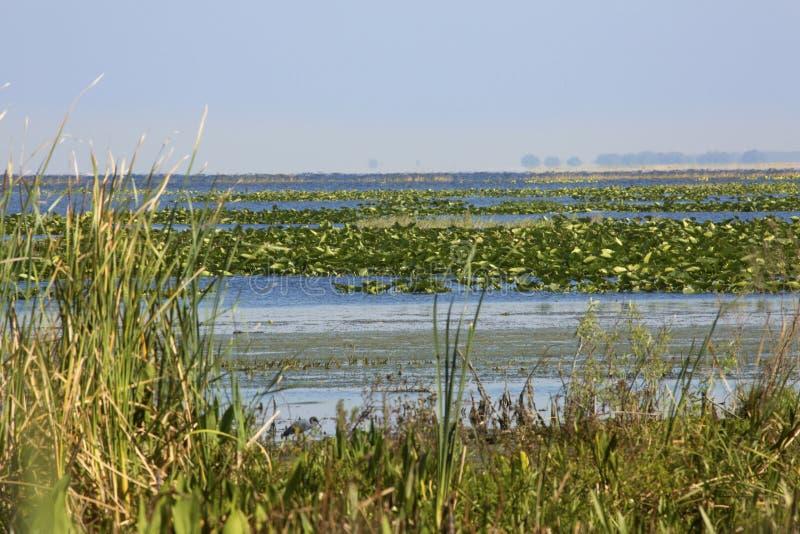 Vegetazione e open water della palude di kissimmee del for Planimetrie della cabina del lago
