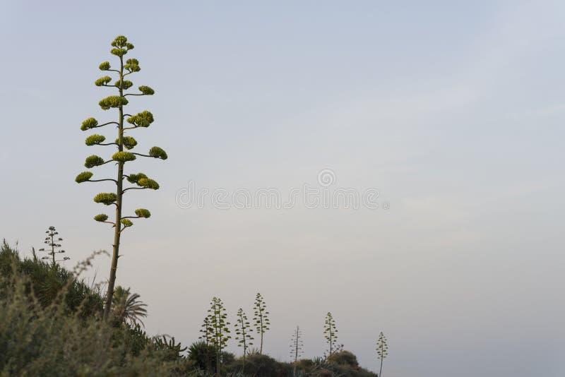 Download Vegetazione Mediterranea fotografia stock. Immagine di wallpaper - 56876764