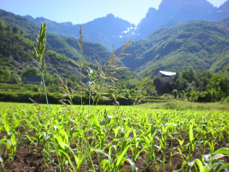 Vegetazione naturale negli altopiani albanesi, Theth, Albania immagini stock libere da diritti