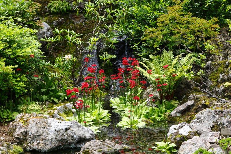 Vegetazione nel giardino botanico dell'università dell'Hokkaido fotografia stock libera da diritti