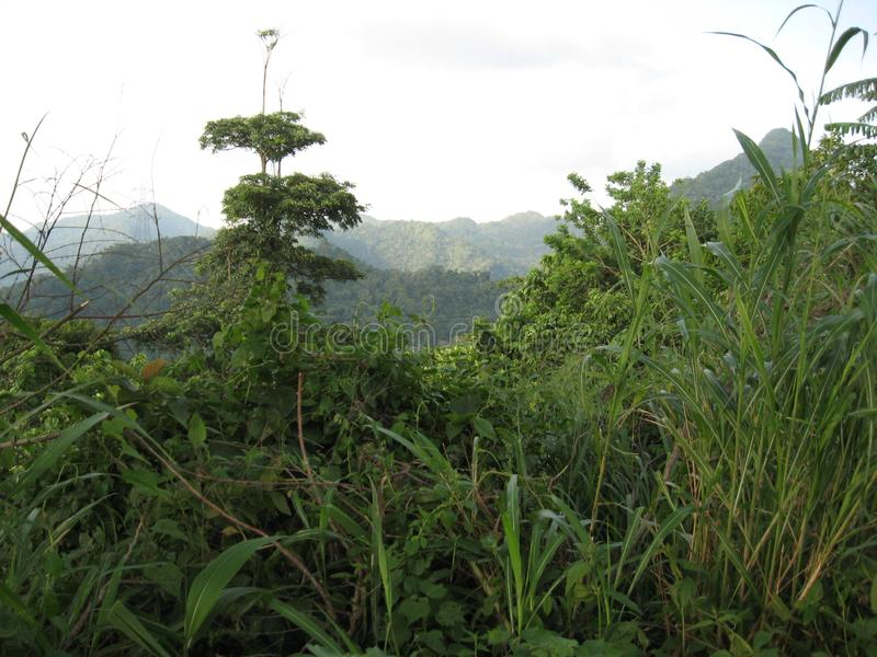 Vegetazione tropicale vicino a San Isidro, città di Lipa, Filippine fotografie stock