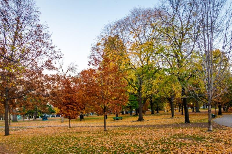 Vegetazione variopinta di autunno del parco del Queens - Toronto, Ontario, Canada fotografie stock libere da diritti