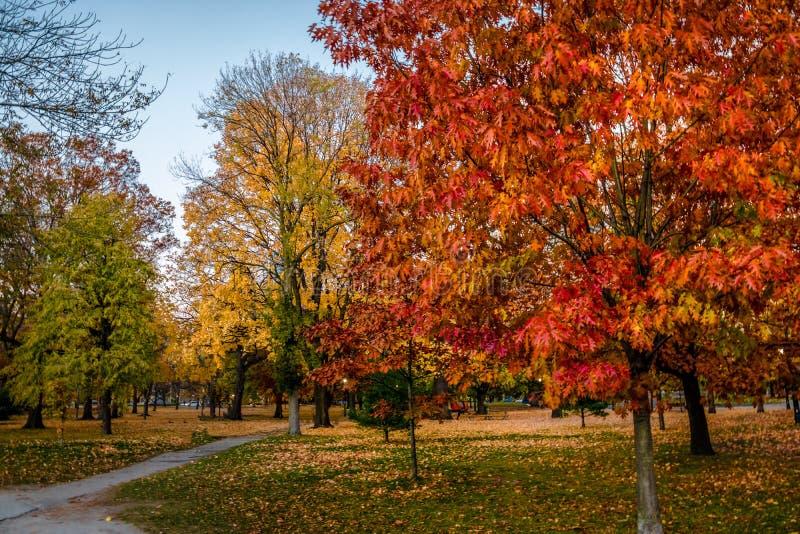 Vegetazione variopinta di autunno del parco del Queens - Toronto, Ontario, Canada immagine stock