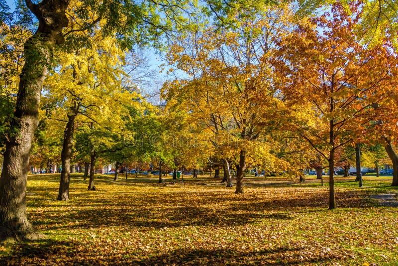 Vegetazione variopinta di autunno del parco del Queens - Toronto, Ontario, Canada fotografia stock libera da diritti
