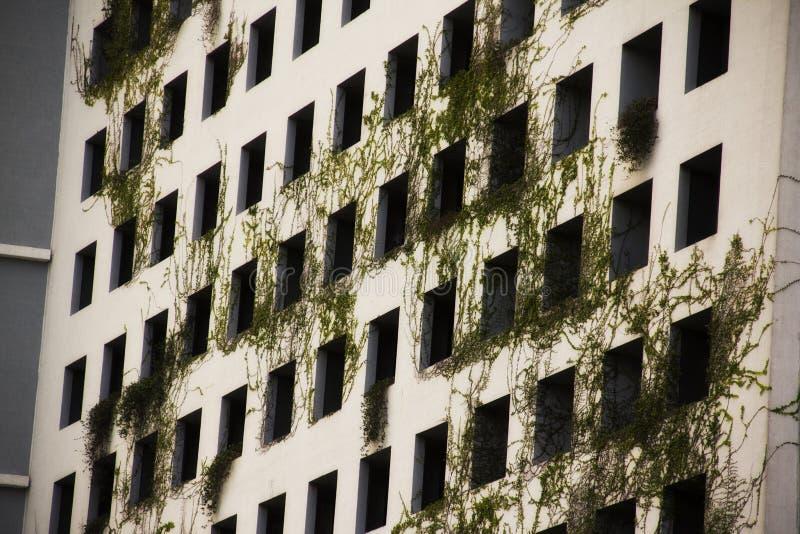Vegetazione verde che cresce dal lato di una costruzione a Miami Florida fotografie stock