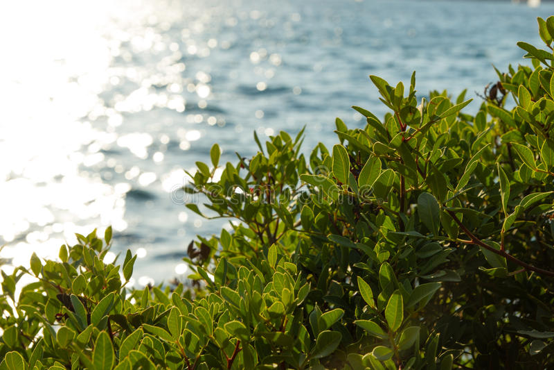 Vegetazione verde nel tramonto