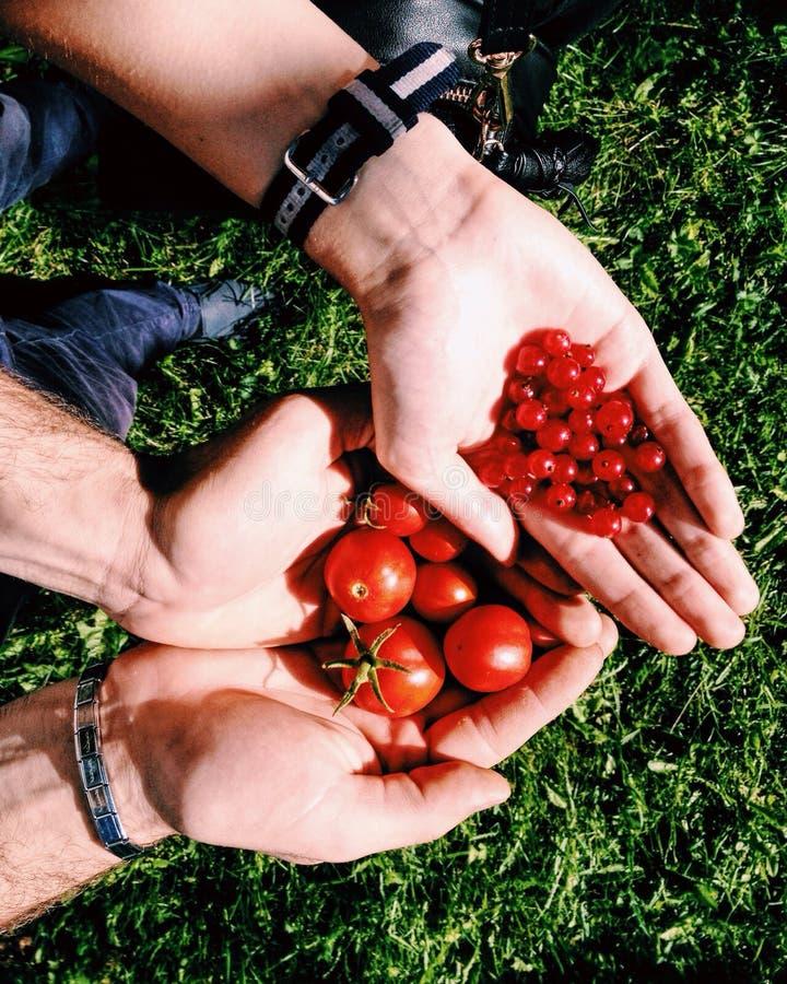 Veggies and berries stock photos